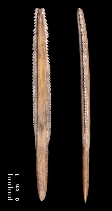 Stingray spine spear